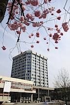 Campus Goettingen Blauer Turm im Hintergrund Makroaufnahme mit rosa Aesten